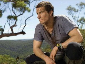 Customs and DOC are both warning travelers that Bear Grylls, such as the one pictured here, are a serious threat to New Zealand's biosecurity