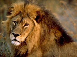 Lion attack victim died doing what she loved; getting mauled to death by a lion