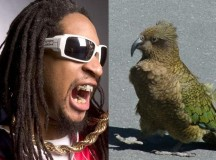 New Zealand's endemic bird species will soon be subjected to 24 hours of non-stop hip hop music every day for more than two months