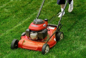 Aucklanders say they're happy with their new mayor, though they do expect it to mow their lawns.