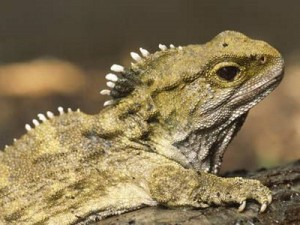 The Civilian explores the five most effective ways to make your home a tuatara-free sanctuary.