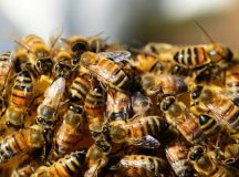 "The bees are reportedly ""not calm, not calm at all."""